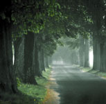 Down the Road with Trees & Fog